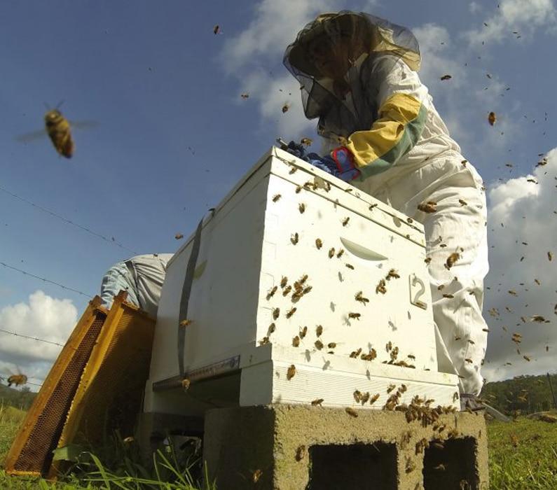 Beehive Feeder